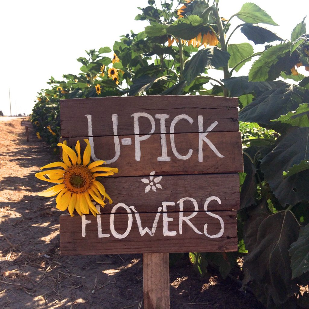 U-Pick flower patch management & promotion
