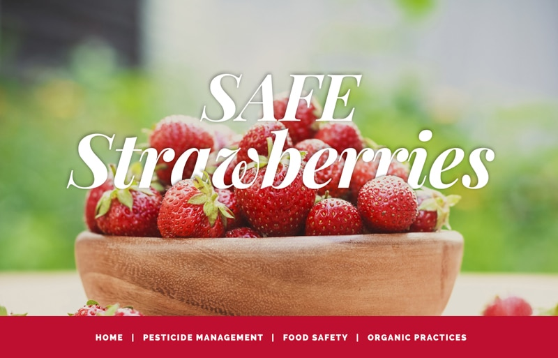 safe-strawberries-cropped